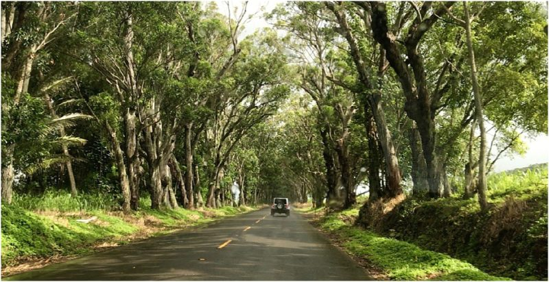 Driving in Hawaii